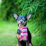 Schöner Hund, ein Welpe in einem Schalsitzen stockbild