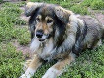 Schöner Hund Jack dachte an etwas beim Sitzen auf einer Kette Stockfoto