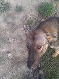Schöner Hund zu Hause Stockfoto
