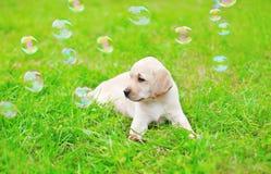 Schöner Hundewelpe Labrador retriever mit Seifenblasen stockbild