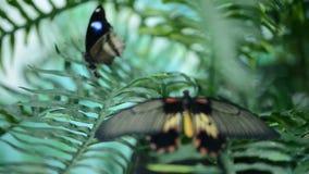Schöner Insektenschmetterling auf Blättern stock video footage