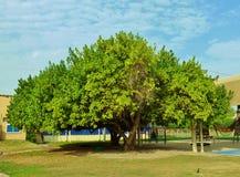 Schöner interessanter Baum Stockbilder