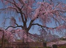 Schöner japanischer Frühling Stockbilder