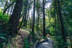 Schöner japanischer Garten in Portland, Oregon lizenzfreies stockfoto
