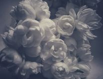 Schöner Jasmin blüht Bild mit einem ästhetischen Blick lizenzfreies stockbild