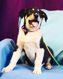 Schöner junger Hund Stockfoto