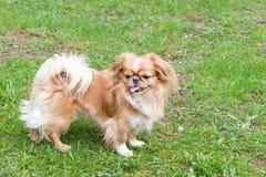Schöner junger Hund auf einem Gebiet Stockbilder