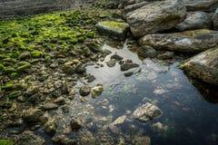 Schöner Küstenuferstein bedeckt mit Moos und Flechte in der Sonne Stockfotos