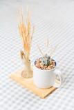 Schöner Kaktus in einer Schale Lizenzfreies Stockfoto