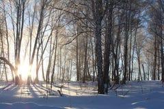 Schöner kalter schneebedeckter Wald im Winter Stockfotos