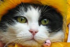 Schöner Katze coverd Kopf auf tha gelbem Schalabschluß lizenzfreie stockfotografie