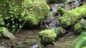 Schöner kleiner Bach im Wald stock video footage