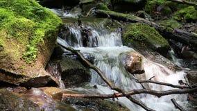 Schöner kleiner Bach und Steine mit grünem Moos stock video