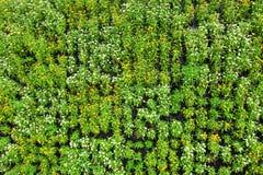 Schöner kleiner Blumenhintergrund mit grünen Blättern Stockfotografie