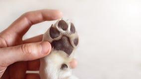 Schöner Labrador-Hund, der auf Kommando in der Schulbildung hört lizenzfreie stockbilder