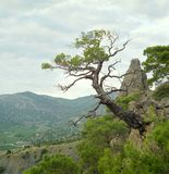 Schöner lebender Baum mit Los Blättern auf Niederlassungen stehen von der hölzernen Anlage hervor stockbild