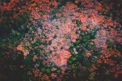 Schöner Luftschuß eines Waldes stockfotos