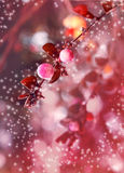 Schöner magischer Effekt blüht mit Herbstlaub im Sonnenschein, Retro- Hippie-Bild der Weinlese mit Sommerblüte Herbstrosa und stockbild