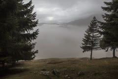 Schöner magischer Wald im Nebel im Herbst lizenzfreie stockbilder