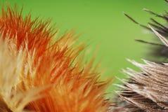 Schöner Makroschuß von Federn! Stockfoto