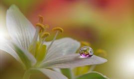 Schöner Makroschuß von magischen Blumen Grenze Art Design Magische Leuchte Extremnahe hohe Makrophotographie Abstraktes begriffli Stockbild