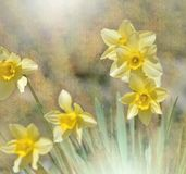 Schöner Makroschuß von magischen Blumen Grenze Art Design Magische Leuchte Ostern blüht Liliennarzisse Haus gebildet vom Geld im  Lizenzfreie Stockbilder