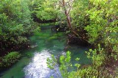 Schöner Mangroven-Wald, Krabi, Thailand Lizenzfreies Stockbild