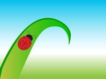 Schöner Marienkäfer auf grünem Blatt auf Wiese Stockfotografie