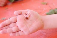 Schöner Marienkäfer der Nahaufnahme an Hand des Kindes und der Tabelle für rotes Ba Lizenzfreie Stockbilder