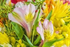 Schöner mehrfarbiger Blumenhintergrund stockfoto
