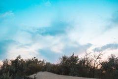 Schöner mehrfarbiger Sonnenunterganghimmel füllte mit vielen dragonflyes auf dem sandigen Strand mit Bäumen im Hintergrund Lizenzfreie Stockfotos