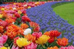 Schöner mit Gras bedeckter gebogener Garten mit vielen farbigen Blumen stockfotografie