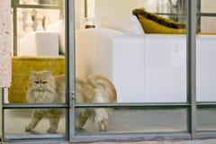 Schöner moderner Innenraum mit einer Katze Stockfotografie