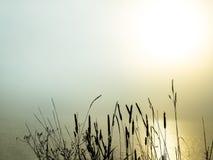 Schöner Morgennebel über einem See Stockfotografie