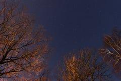 schöner nächtlicher Himmel, die Milchstraße und die Bäume lizenzfreies stockbild