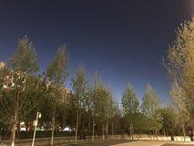 Schöner nächtlicher Himmel mit grünen Bäumen darunter stockfotos