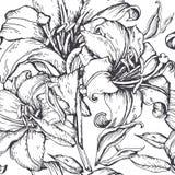 Schöner nahtloser Hintergrund mit Lilienhandzeichnung Lizenzfreies Stockfoto