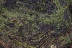 Schöner natürlicher alter Baumhintergrund lizenzfreies stockbild