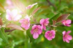 Schöner natürlicher Badekurorthintergrund mit rosa Blumen Lizenzfreie Stockfotografie