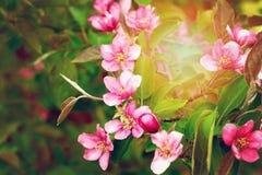 Schöner natürlicher Badekurorthintergrund mit rosa Blumen Stockfoto