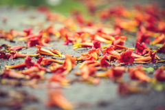 Schöner natürlicher Hintergrund mit orange Blumen Stockfotos