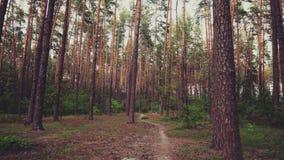 Schöner Natur-Forest Trees Green Grass Sun-Holz-Sonnenuntergang stock video footage