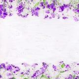 Schöner Natur-Frühlings-Blumenhintergrund Stockbilder