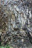 Schöner Naturbaum Beschaffenheit des Holzes benutzt, wie natürlich Abst Stockfoto