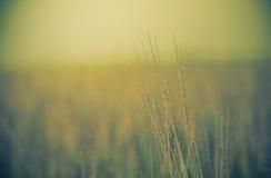 Schöner Naturhintergrund Stockbild