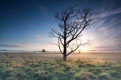 Schöner nebelhafter Frühlingssonnenaufgang auf Sumpf lizenzfreies stockbild