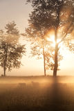 Schöner nebelhafter Goldsonnenaufgang auf niederländischem Ackerland lizenzfreie stockbilder