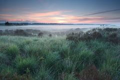 Schöner nebelhafter Morgen auf Sumpf lizenzfreies stockfoto
