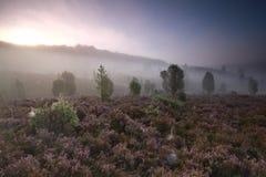 Schöner nebelhafter Sonnenaufgang über Hügeln mit blühender Heide stockbild