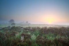 Schöner nebelhafter Sonnenaufgang über Sumpf lizenzfreie stockfotografie